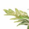 Bild von Künstliche Pflanze - Palm - 15x45x50cm