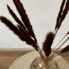 Afbeelding van Pampasgras Fluffy Bruin - 20 stuks 70cm