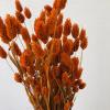 Afbeelding van Droogbloemen Phalaris Oranje - Bos