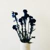 Afbeelding van Celosia Blauw Velvet - Bos