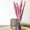 Bild von Pampasgras Getrocknete Rose - 4 Stück 110cm