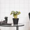 Bild von Künstliche Pflanze - Pfannkuchen-Anlage -11x15x25cm