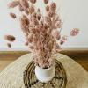 Bild von Phalaris Pink - Wald