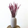 Bild von Weizen Triticum Rosa - Wald