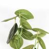 Afbeelding van Kunstplant Lange Bos - Eucalyptus - 10x16x65cm