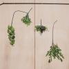Afbeelding van Kunst Bos Ficus -10x20x60cm