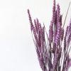 Bild von Weizen Triticum Lila - Wald