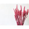 Afbeelding van Tarwe Triticum Roze - Bos