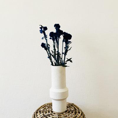 Celosia Blauw Velvet - Bos