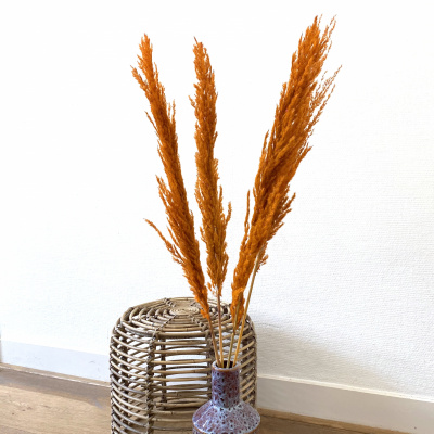 Pampasgras Getrocknete Orange - 4 Stück 100cm