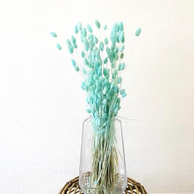 Phalaris Blau - Wald
