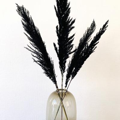 Pampasgras Gedroogd Zwart - 5 stuks 100cm