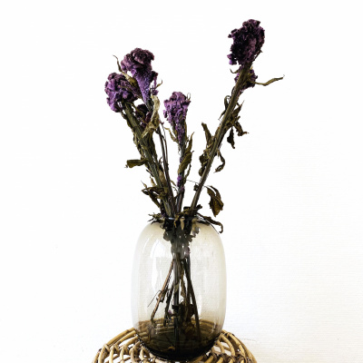 Celosia Paars Velvet - Bos