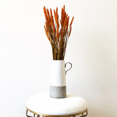 Tarwe Triticum Oranje - Bos