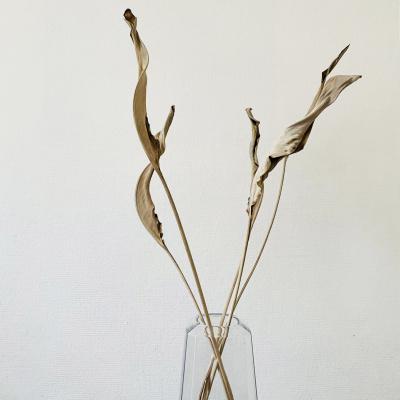 Strelitzia Blätter - 5 Stück