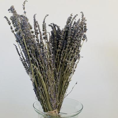 Lavendel - Bos