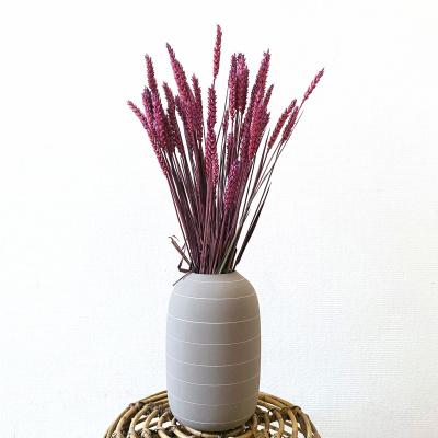 Weizen Triticum Rosa - Wald