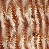 Afbeelding van Overhemd retro, Feathers brown