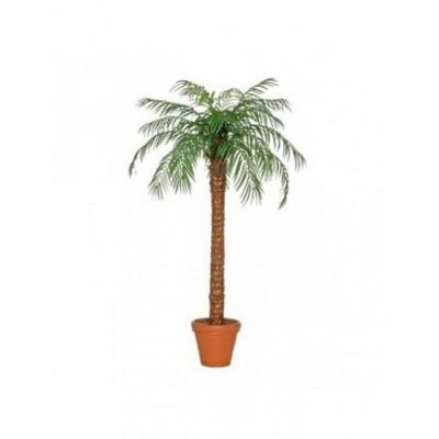 Foto van Palmbomen 220 cm