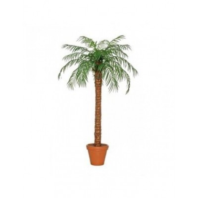 Foto van Palmboom 220 cm