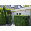 Bild 26 von Azalp Blockhaus Ingmar 450x350 cm, 45 mm