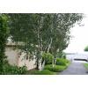 Bild 12 von Azalp Blockhaus Ingmar 550x500 cm, 45 mm
