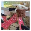 Afbeelding van Kinderfeets Retro Cupcake Tweewieler Loopfiets