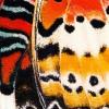 Afbeelding van Sock my butterfly