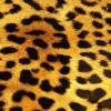 Afbeelding van Sock my tiger